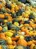 Various pumpkins Stock Photos