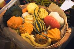 Various pumpkins on a basket Stock Images