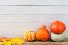 Various pumpkins with colorful maple leaves against light wooden wall background. Autumn and halloween concept. Free space. Various pumpkins with colorful maple stock images