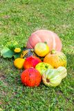 Various pumpkins cultivar squash plant Cucurbita pepo fresh from the market as close up for thanksgiving or decorate on halloween royalty free stock photo