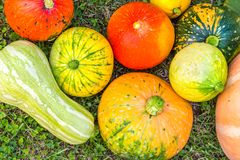 Various pumpkins cultivar squash plant Cucurbita pepo top view fresh from the market for thanksgiving or decorate on halloween royalty free stock photography