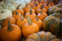 Various Pumpkins and Gourds stock photos