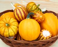 Various pumpkins, melons and corn in wattled basket stock image