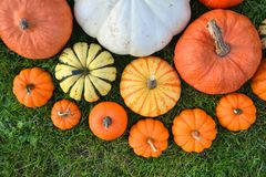 Various pumpkins and squashes on the grass Royalty Free Stock Images