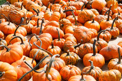 Various Pumpkins on table during fall Royalty Free Stock Images