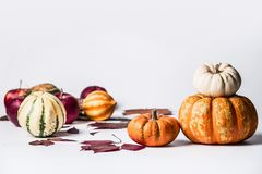Various pumpkins on white background with fall leaves, front view. Autumn vegetables , Thanksgiving food. Concept stock image