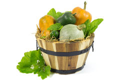 Various Pumpkins in Wooden Basket with Hay and Green Leaves Isolated on White Royalty Free Stock Photos