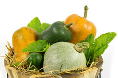 Various Pumpkins in Wooden Basket with Hay and Green Leaves Isolated on White Stock Image