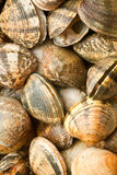 Various raw clams royalty free stock photos