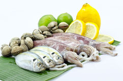 Various raw seafood Stock Photography