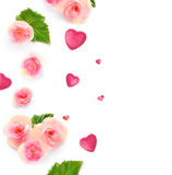 Various Red Flowers Isolated on White Background and hearts Royalty Free Stock Image