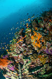 Various reef fishes swim above coral reefs in Gili, Lombok, Nusa Tenggara Barat, Indonesia underwater photo Royalty Free Stock Image