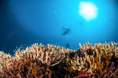 Various reef fishes are swimming above hard coral Acropora in Gili, Lombok, Nusa Tenggara Barat, Indonesia underwater photo Stock Images