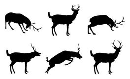 Various Reindeer Royalty Free Stock Photo