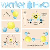 Various representations of water molecule H2O. Structural formula, balls and sticks model, hydrogen bonding , water dipole, electronic structure, electron Royalty Free Stock Photos