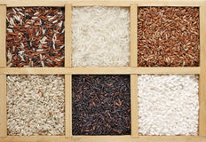 Various rice in box Royalty Free Stock Images