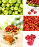 Various ripe berries on a white background Royalty Free Stock Photos
