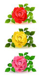 Various of  roses color Royalty Free Stock Photos