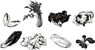 Various salads leaning against a table. Various salads on white leaning against a table Stock Photo