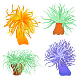 Various sea anemones Royalty Free Stock Images