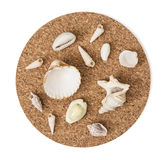 Various sea shells on the circular cork base Stock Images