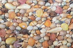 Various Sea Shells on a Concrete Wall Decoration Outdoor Park royalty free stock photo