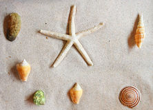 Various of sea shells Stock Images
