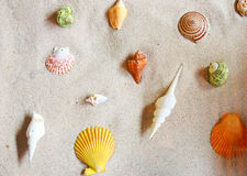 Various of sea shells Stock Photos