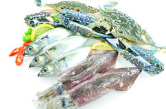 Various seafood. On white Royalty Free Stock Images