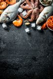 Various seafood with ice cubes. On black rustic background stock photos
