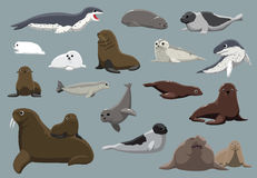 Various Seals Set Cartoon Vector Illustration Royalty Free Stock Photography