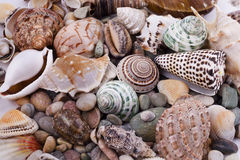 Various seashells royalty free stock image