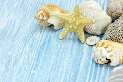 Various seashells and starfish lying on the painted old wooden t Stock Image