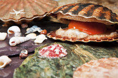 Various seashells on wet stones Royalty Free Stock Photos