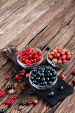 Various seasonal berries Stock Images