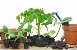 Various seedlings Royalty Free Stock Photography