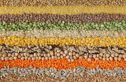 Various Seeds And Grains Stock Photo