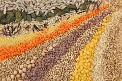Various Seeds And Grains Royalty Free Stock Image