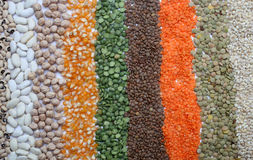 Various seeds and grains Stock Images