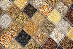 Various seeds for planting in the cells Stock Photos