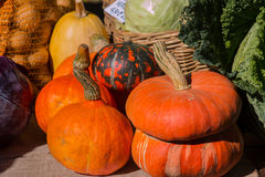 Various shapes and colors of pumpkins  in a country fair Royalty Free Stock Photography