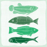 Various shapes of fish Stock Photo