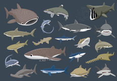 Various Sharks Set Cartoon Vector Illustration Stock Image