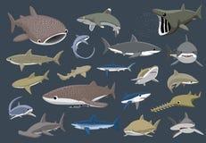 Various Sharks Set Cartoon Vector Illustration Stock Image
