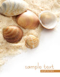 Various shells Royalty Free Stock Photography