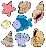 Various shells and fish collection. Illustration Royalty Free Stock Photos