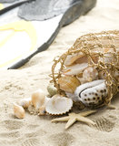 Various Shells In Twine Mesh Royalty Free Stock Photography