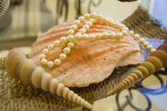 Various  shells and pearl necklace over straw basket Stock Photos