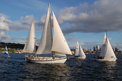 Various sized sailboats race on Lake Union Royalty Free Stock Images