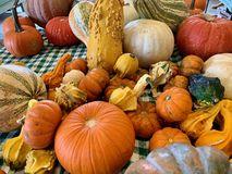Various shapes of pumpkins for sale during halloween stock photography
